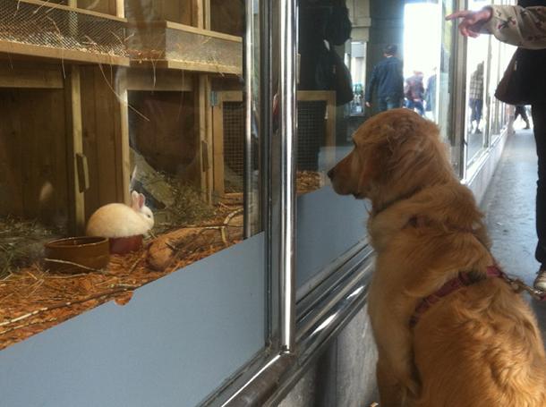 Cani e conigli